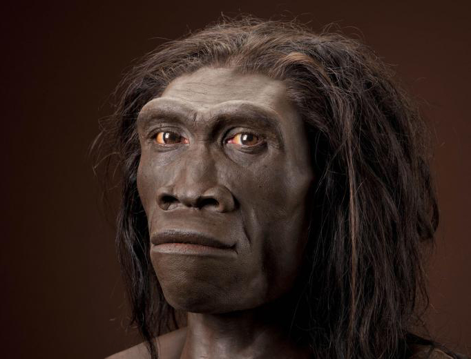 homo-erectus-reconstruction-gurche.jpg
